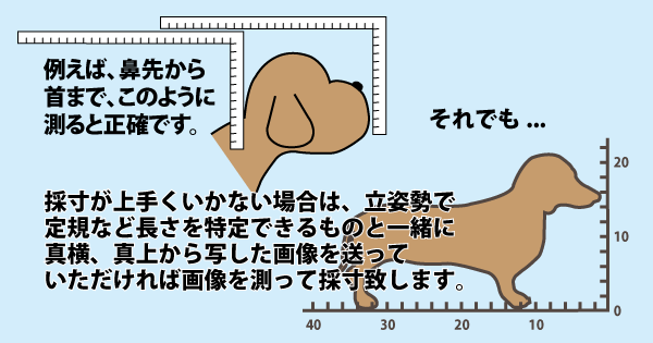 ドッグバンパー™測り方の例